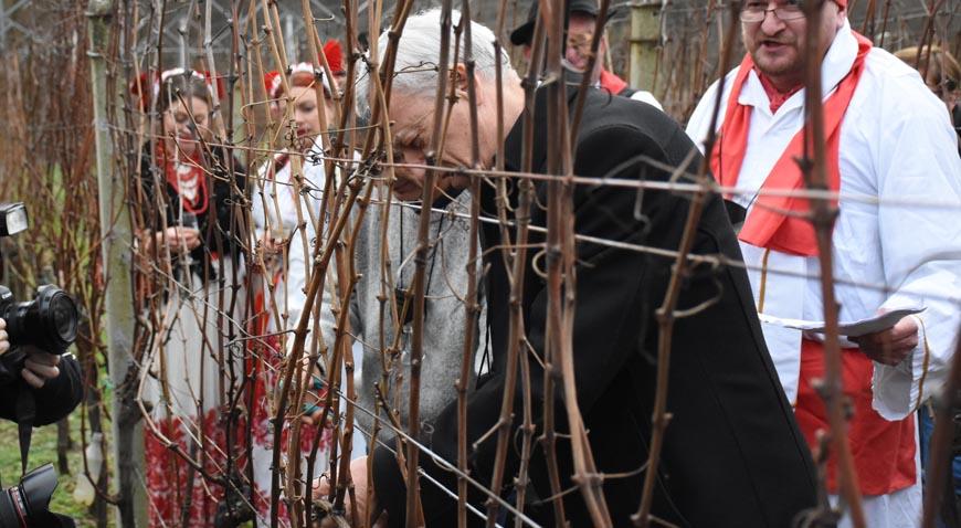 Tradiciju treba poštivati, a vinogradari do toga i drže