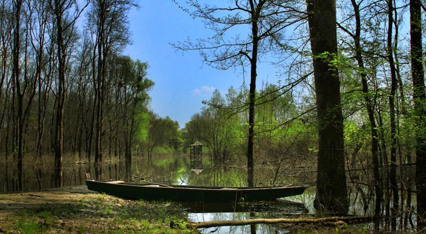 Priprema se još jedan foto safari Čudesna šuma Žutica