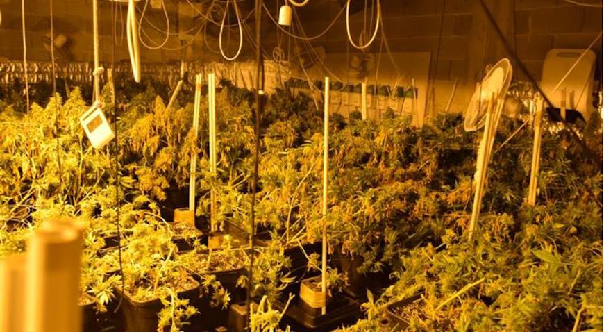 U kući u Zaprešiću sadili marihuanu za daljnju preprodaju