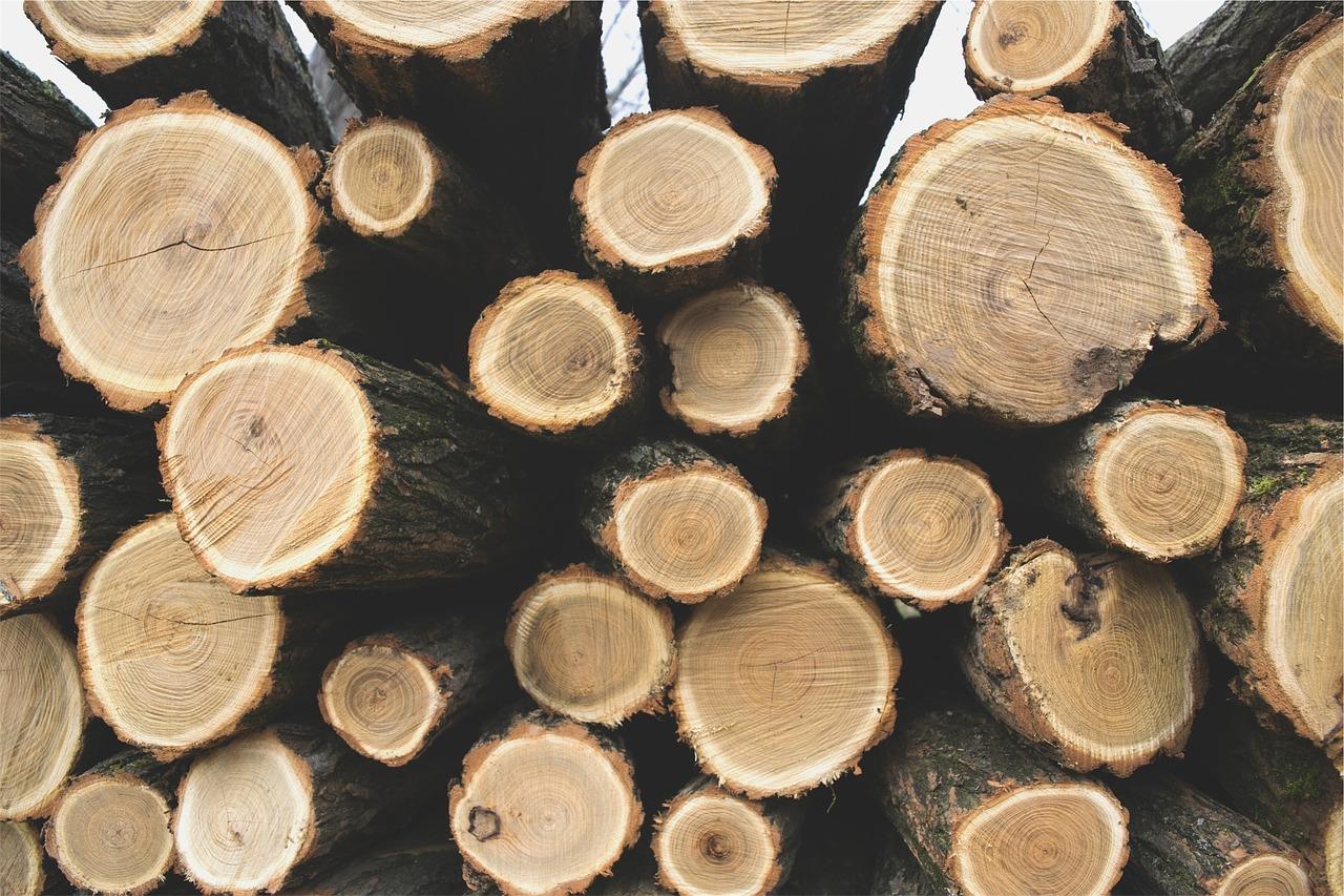 U Gredi ukrao gotovo 200 stabala hrasta lužnjaka i graba od vjerske ustanove