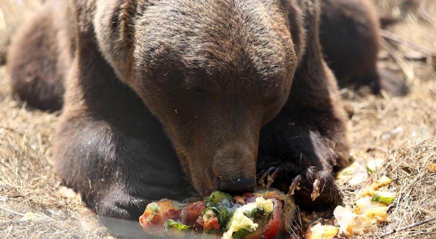 VIDEO: Medvjedi u Kuterevu uživaju u ledenim poslasticama