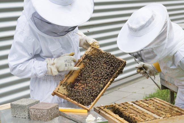 Županija dodijelila 90 tisuća kuna za prihranu ugroženih pčelinjih zajednica