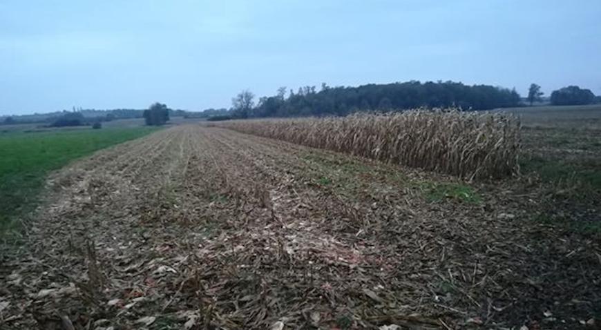 S tuđe njive kombajnom pobrao kukuruz, vlasniku ostala samo četiri reda