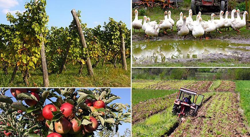 Poljoprivrednicima dodatnih 3,2 milijuna kuna bespovratnih potpora