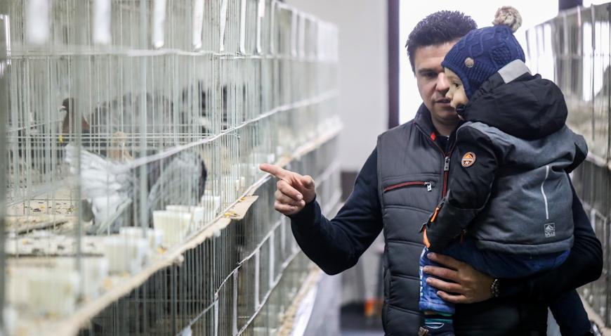 VIDEO: Izložba malih životinja u Hreliću okupila 37 izlagača